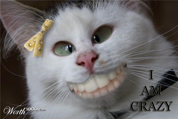 Crazy cat crazy 20cat 20625x416